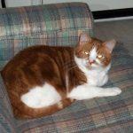 Samson on the sofa.
