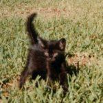 Suki as a kitten.