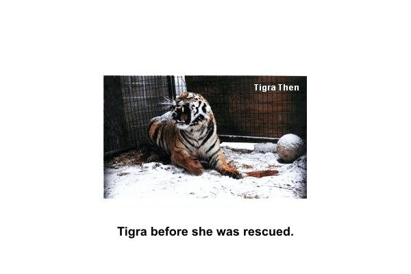Tigra's Habitat Construction Photo 61