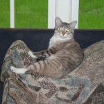 Zeus on the sofa.