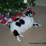 Zoe under the Christmas tree.
