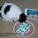 Zoe's 14th birthday.