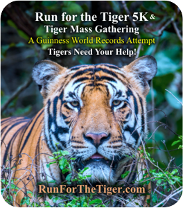 Run for the Tiger link