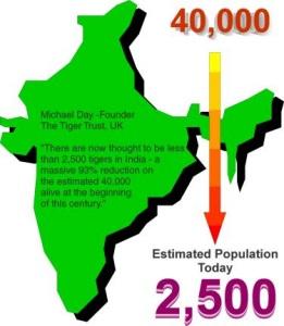 India Tiger Population