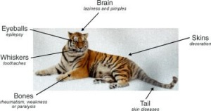 Tiger Parts