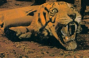 Tiger Skin Rug - Save the Tigers