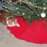 Samson under the Christmas tree.