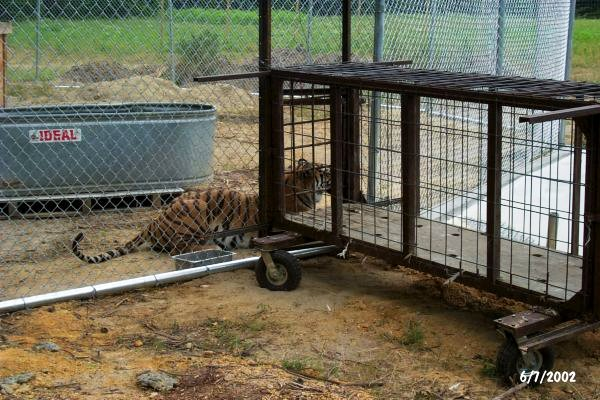 Tigra's Habitat Construction Photo 8