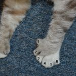 Zeus' front paws with six toes.