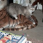Zeus on a plush tiger.